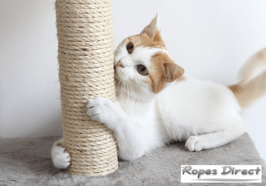 cat playing with DIY cat scratching post