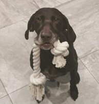 dog with cotton rope toy