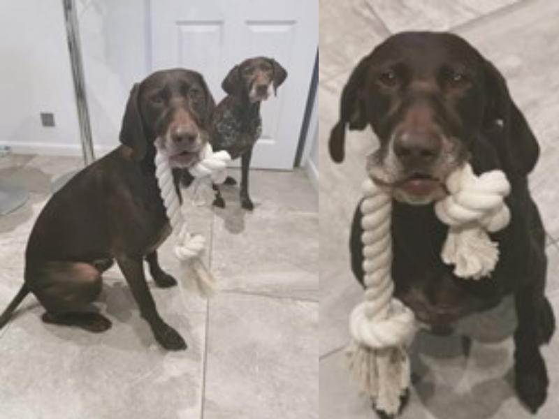 dogs holding cotton rope toys