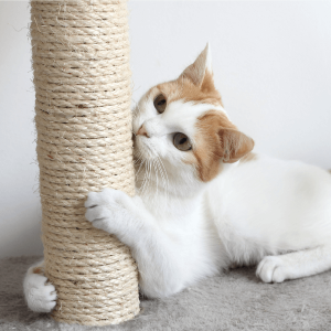 Rope for cats